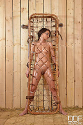 Sophie Lynx Bound in a Cage